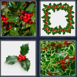 4-pics-1-word-5-letters-holly