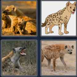 4-pics-1-word-5-letters-hyena