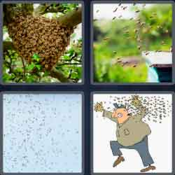 4 Pics 1 Word 5 Letters Level 3659 Swarm