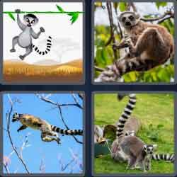 4 Pics 1 Word 5 Letters Level 3676 Lemur