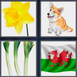 4 pics 1 word 5 letters yellow flower