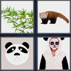 4 pics 1 word 5 letters black and white bear
