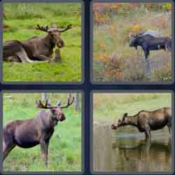 4-pics-1-word-5-letters-moose