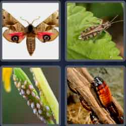 4-pics-1-word-5-letters-pests