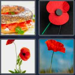 4-pics-1-word-5-letters-poppy