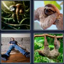 4-pics-1-word-5-letters-sloth