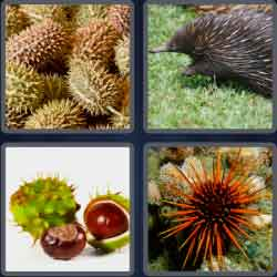 4-pics-1-word-5-letters-spiny