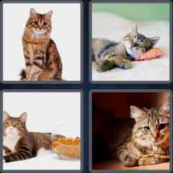 4-pics-1-word-5-letters-tabby