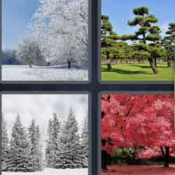 4 Pics 1 Word 5 Letters Trees