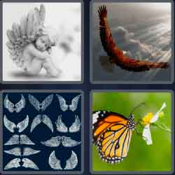 4-pics-1-word-5-letters-wings