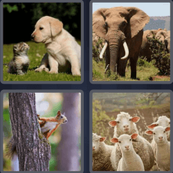 4-pics-1-word-6-letters-animal
