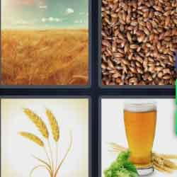 4 Pics 1 Word 6 Letters Barley