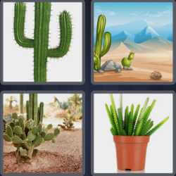 4-pics-1-word-6-letters-cactus