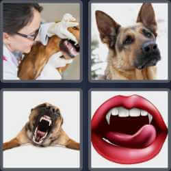 4-pics-1-word-6-letters-canine