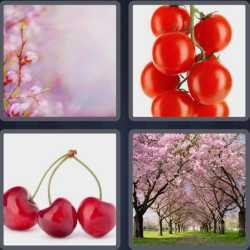 4 Pics 1 Word 6 Letters Cherry