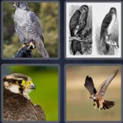 4-pics-1-word-6-letters-falcon