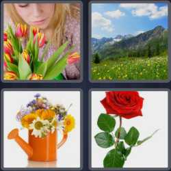 4-pics-1-word-6-letters-flower