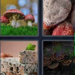 4 Pics 1 Word 6 Letters Fungus