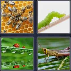 4-pics-1-word-6-letters-insect
