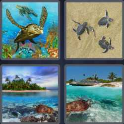 4-pics-1-word-6-letters-turtle