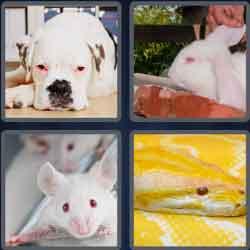 4-pics-1-word-6-letters-albino