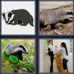 4 Pics 1 Word 6 Letters Badger