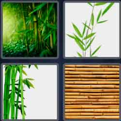 4-pics-1-word-6-letters-bamboo