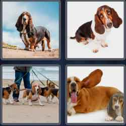 4-pics-1-word-6-letters-basset