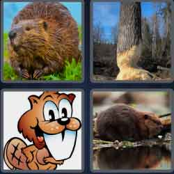 4-pics-1-word-6-letters-beaver