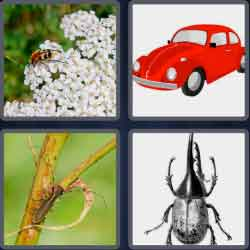 4-pics-1-word-6-letters-beetle