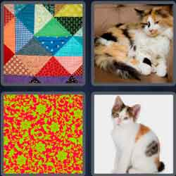 4-pics-1-word-6-letters-calico