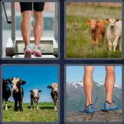 4-pics-1-word-6-letters-calves