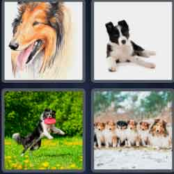4 Pics 1 Word 6 Letters Collie