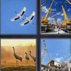 4 Pics 1 Word 6 Letters Cranes