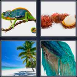4-pics-1-word-6-letters-exotic
