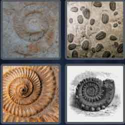 4-pics-1-word-6-letters-fossil