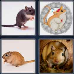 4-pics-1-word-6-letters-gerbil