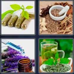4 Pics 1 Word 6 Letters Herbal