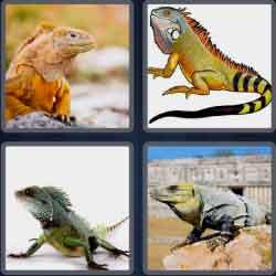 4-pics-1-word-6-letters-iguana