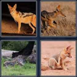 4-pics-1-word-6-letters-jackal