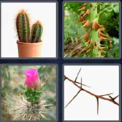 4 Pics 1 Word 6 Letters Level 3664 Thorny