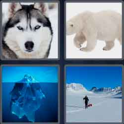 4 pics 1 word 6 letters polar bear