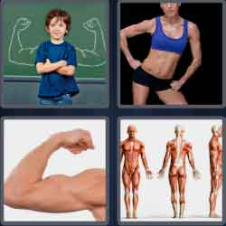 4 Pics 1 Word 6 Letters Level 3758 Muscles