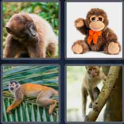 4-pics-1-word-6-letters-monkey