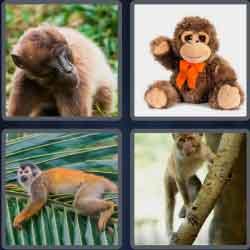 4 Pics 1 Word 6 Letters Monkey