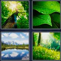 4-pics-1-word-6-letters-nature
