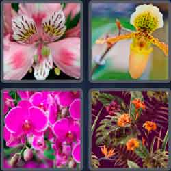 4-pics-1-word-6-letters-orchid
