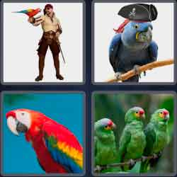 4-pics-1-word-6-letters-parrot