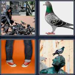 4-pics-1-word-6-letters-pigeon