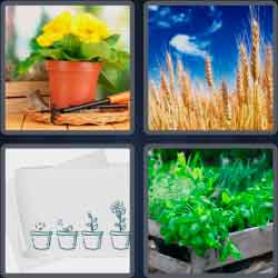 4-pics-1-word-6-letters-plants